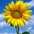 słonecznika · szczęścia · portret · cute · kobiet · bliźnięta - zdjęcia stock © oorka