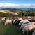 feminino · norfolk · chifre · ovelha · cordeiro - foto stock © oorka