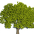 ağaç · yaprakları · 3d · render · yalıtılmış · beyaz · manzara - stok fotoğraf © orla