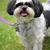 子犬 · かわいい · 立って · 外 - ストックフォト © oscarcwilliams