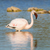 pink flamingo standing in the water stock photo © ottoduplessis