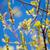бабочка · вид · подвесной · красный · мудрец · цветок - Сток-фото © ottoduplessis
