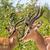 trzy · mężczyzna · stałego · wraz · zielone · liście - zdjęcia stock © ottoduplessis