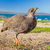 kíváncsi · felfelé · néz · fej · oldal · kék · tenger - stock fotó © ottoduplessis