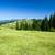 floresta · árvores · verde · lago · terreno - foto stock © pakhnyushchyy