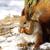 белку · снега · природы · волос · зима · животные - Сток-фото © pakhnyushchyy