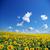 napraforgó · mező · fényes · citromsárga · kék · égbolt - stock fotó © pakhnyushchyy