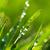 grama · jardim · rocha · flores · verde - foto stock © pakhnyushchyy