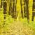 erdő · kert · arany · levelek · ősz · ősz - stock fotó © pakhnyushchyy