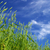 wheat field stock photo © pakhnyushchyy
