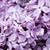 Буш · сирень · ароматный · ножницы · деревянный · стол · цветок - Сток-фото © pakhnyushchyy