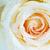 закрывается · капли · роса · бутон · цветок · весны - Сток-фото © pakhnyushchyy