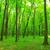 ösvény · zöld · erdő · naplemente · út · nyom - stock fotó © pakhnyushchyy
