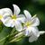 花 · 白 · 花 · 自然 · 赤 · スパ - ストックフォト © pakhnyushchyy