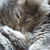 uyku · kedi · gözler · arka · plan · eğlence · dinlenmek - stok fotoğraf © pakhnyushchyy
