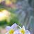 pembe · çiçekler · güzel · nadir · çiçek · doğa - stok fotoğraf © pakhnyushchyy