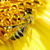 zonnebloem · bee · nectar · honing · productie · bloem - stockfoto © pakhnyushchyy