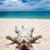 кошки · песок · черпать · белый · натрий · текстуры - Сток-фото © pakhnyushchyy