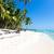 Caribe · cocotero · árboles · mar · hermosa · agua - foto stock © pakhnyushchyy