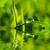 rugiada · drop · lama · erba · giardino · verde - foto d'archivio © pakhnyushchyy