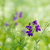 çiçek · detay · kırmızı · doğa · bitki · çiçek - stok fotoğraf © pakhnyushchyy