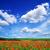 blauwe · hemel · mooie · paars · bloemen · weide · voorjaar - stockfoto © pakhnyushchyy