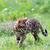 猫 · を実行して · 孤立した · 白 · 笑顔 · 青 - ストックフォト © pakhnyushchyy