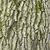 dąb · kory · powierzchnia · mech · naturalnych · tekstury - zdjęcia stock © pakhnyushchyy