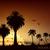 африканских · лев · закат · иллюстрация · небе · силуэта - Сток-фото © panaceadoll