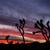 закат · силуэта · деревья · драматический · красочный · небе - Сток-фото © pancaketom
