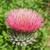 花 · 白 · 自然 · 夏 · 色 - ストックフォト © pancaketom