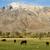 Kaliforniya · alan · dağ · manzara · dağlar · çit - stok fotoğraf © pancaketom