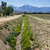 empty irrigation channel stock photo © pancaketom