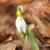 görüntü · makro · Paskalya · doğa · bahçe · çiçek - stok fotoğraf © pancaketom