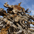 weathered pine roots stock photo © pancaketom