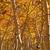 erdő · fenyőfa · eltorzult · halszem · lencse · természet - stock fotó © pancaketom