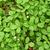 野イチゴ · ベリー · 成長 · 自然 · 環境 · マクロ - ストックフォト © pancaketom