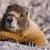 alpes · Suisse · vacances · permanent · fourrures · tourisme - photo stock © pancaketom