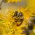 arı · çiçekler · bahar · çiçekli · meyve · ağacı · bahçe - stok fotoğraf © pancaketom