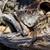 死んだ · 魚 · ビーチ · 水 · 食品 · 海 - ストックフォト © pancaketom