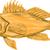 black sea bass drawing stock photo © patrimonio