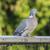 голубь · чердак · окна · здании · птица - Сток-фото © paulfleet