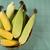 Corn maize and popcorns combined on a table.  stock photo © paulovilela