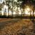 Sun light throungh tree stock photo © paulwongkwan