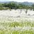 campo · agradable · tiempo · hierba · forestales · naturaleza - foto stock © paulwongkwan