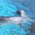 cute dolphins dancing in light blue water stock photo © pawelsierakowski