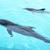 beautiful dolphins swimming in the pool stock photo © pawelsierakowski