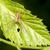 spin · foto · blad · achtergrond · groene - stockfoto © pazham