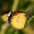 虎 · 蝶 · 赤 · 花 · 公共 · 公園 - ストックフォト © pazham
