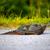 água · doce · tartaruga · imagem · fora · água · natureza - foto stock © pazham